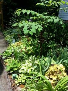 shade garden, hosta, fern, coral bells