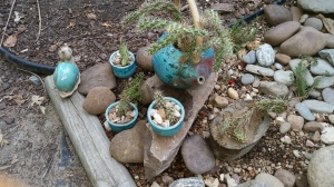 I put the large prickly pear in the hypertufa planter I made a few weeks ago and small prickly went into a couple cups