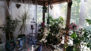Under my gazebo on the deck where many of my houseplants live -April through October