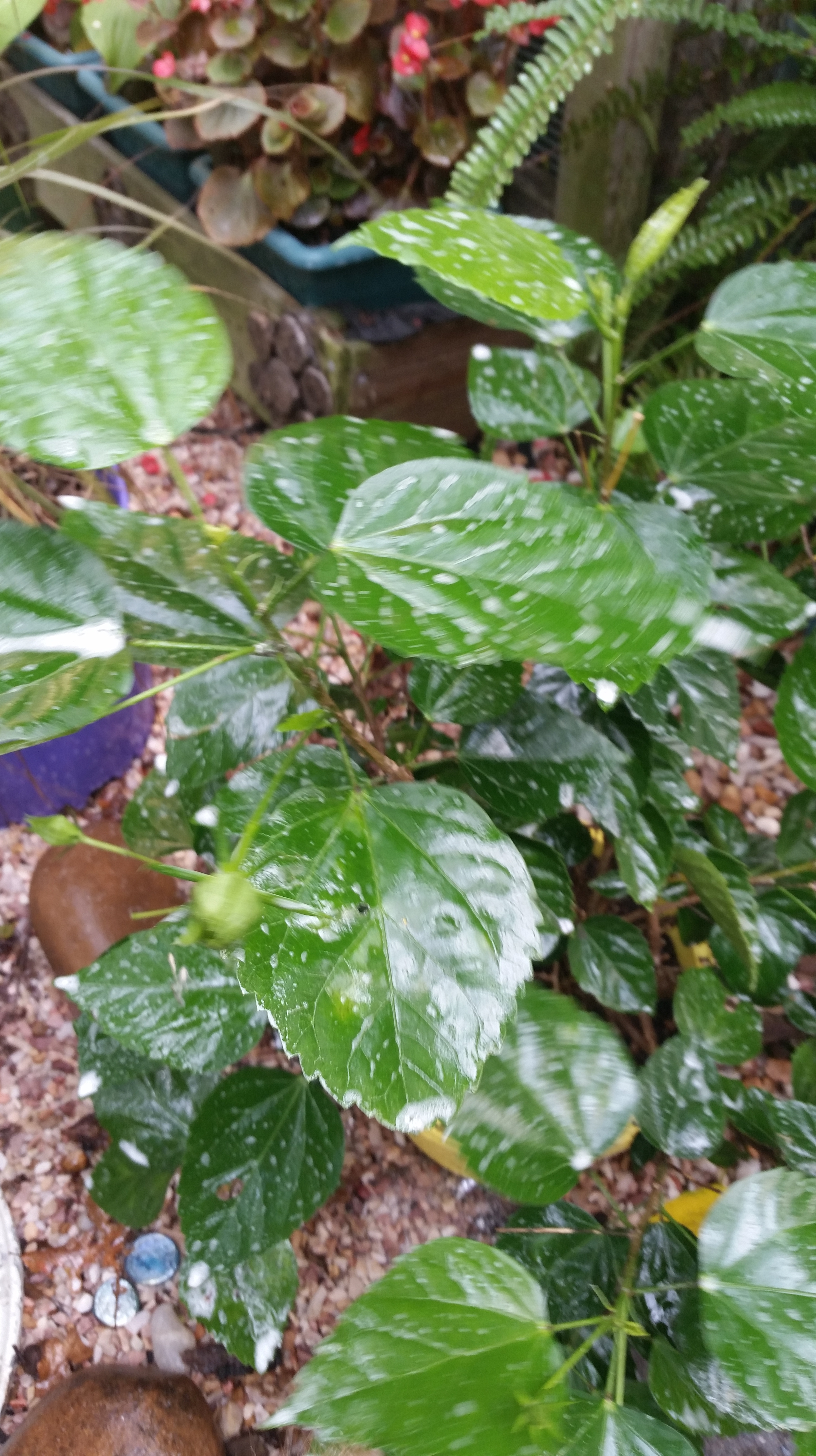 Overwintering Tropical Plants