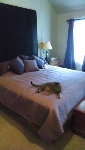 king size platform bed, DIY platform bed,