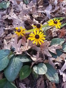 random fall flowers 014