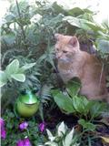 Shade garden with Thomas (RIP) in summer of 2010