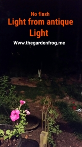 The pond is in the back of the yard and was even lit up a little!