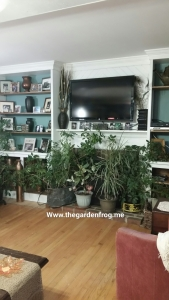 #1 tip for watering your houseplants