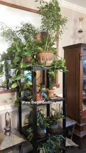#1 tip for watering houseplants