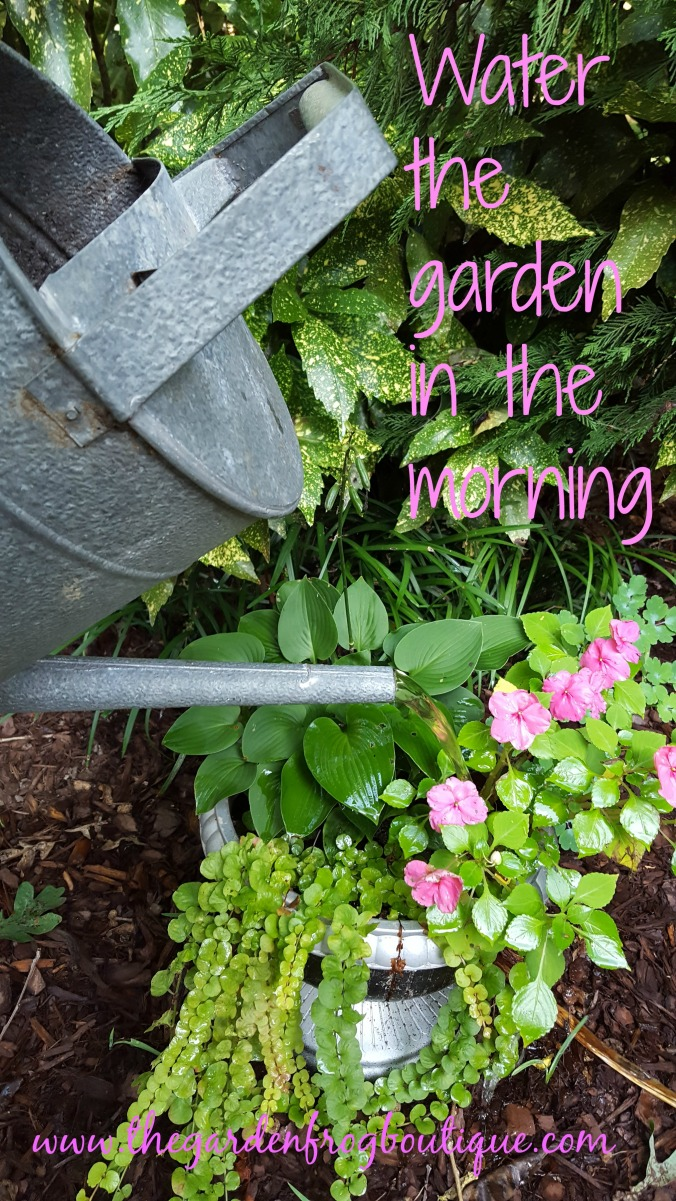 Water the garden in the morning
