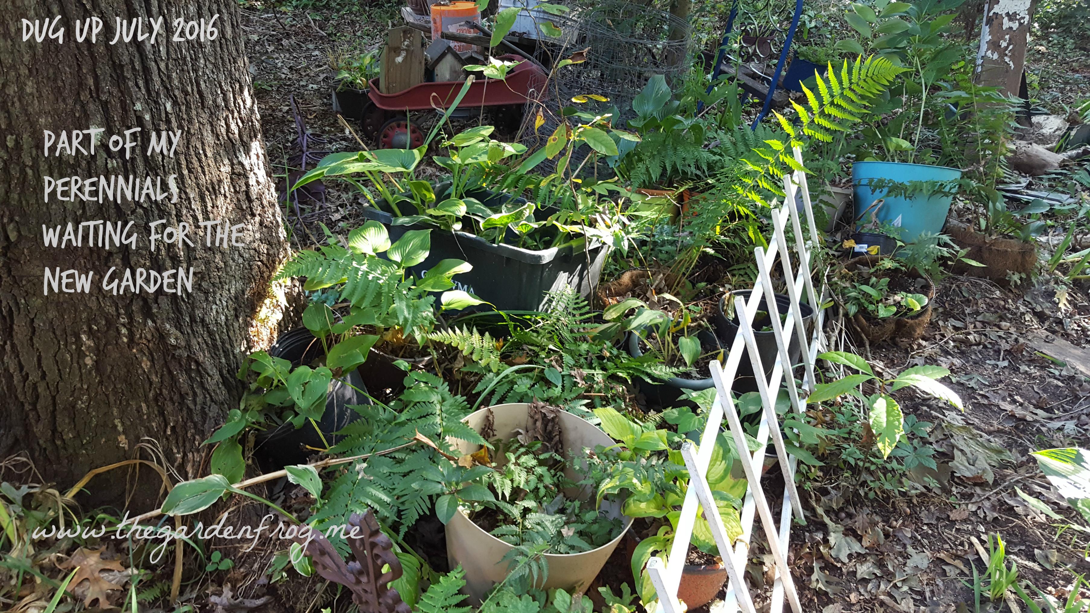 Dreaming of a new garden