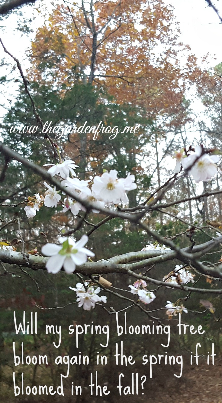Will My Spring Blooming Tree Bloom Again In The Spring If It Bloomed